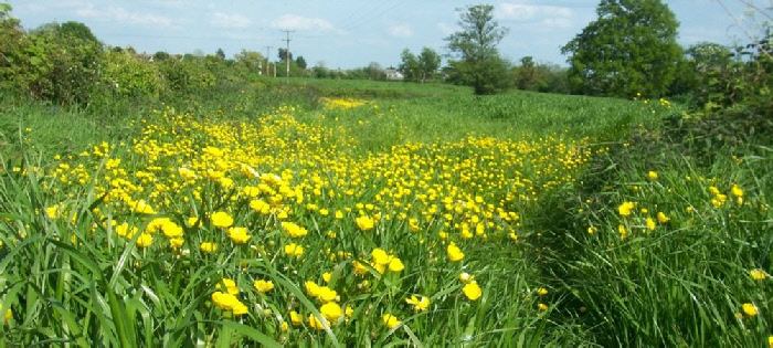 Across the fields from footpath FWO/60/2, by Angela Fairless*