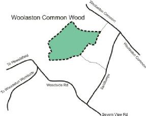 Woolaston Common Wood